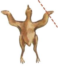 Место ампутации кисти крыла у суточных цесарят