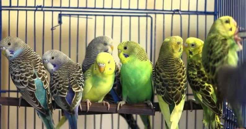 Перевозка живых птиц